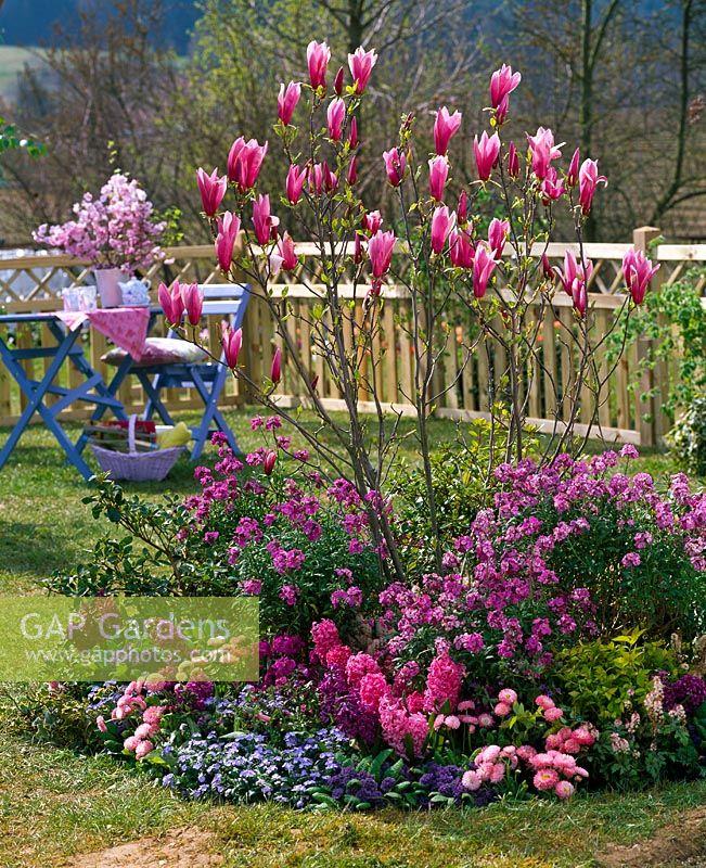 Gap Gardens Circular Border In Small Garden Planted With Magnolia