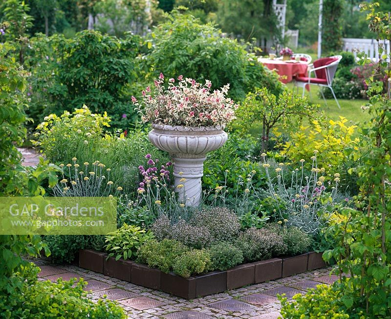 Herb border with Thymus vulgaris and citriodorus, Salvia, Helichrysum, Mentha and Allium. Bowl on stand in the border, planted with Salvia 'Tricolor'.