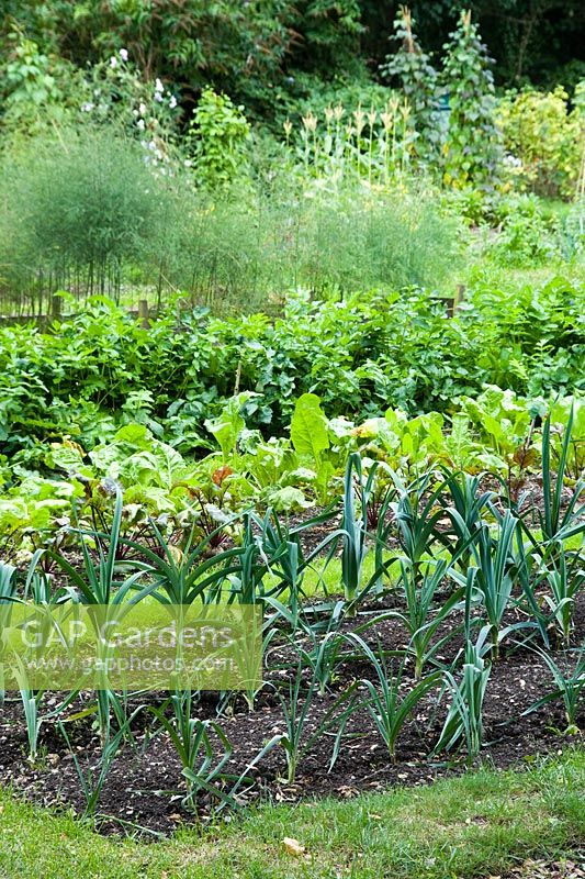 Allotment plot with rows of leeks, beetroot and parsnips - Empty Common allotments, Cambridge