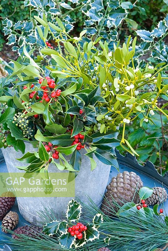 Christmas foliage in metal bucket - holly, mistletoe, ivy with pine and cones
