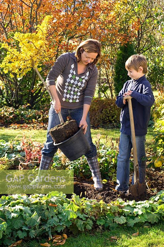 Woman and boy planting Ginkgo biloba in border with Alchemilla