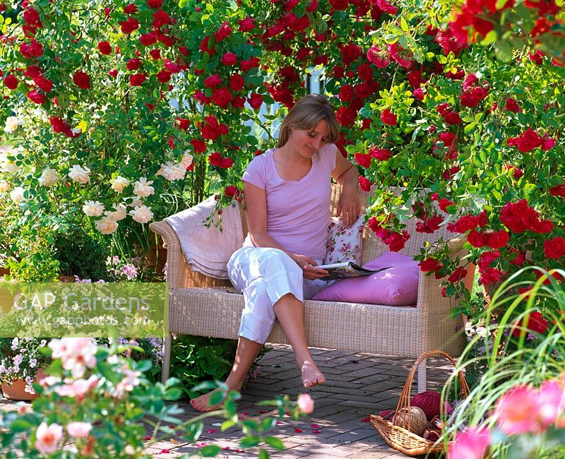 Woman reading on garden seat beneath Rosa 'Flammentanz' and Rosa 'Teasing Georgia'