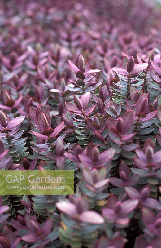 Image Result For Country Gardens Magazine