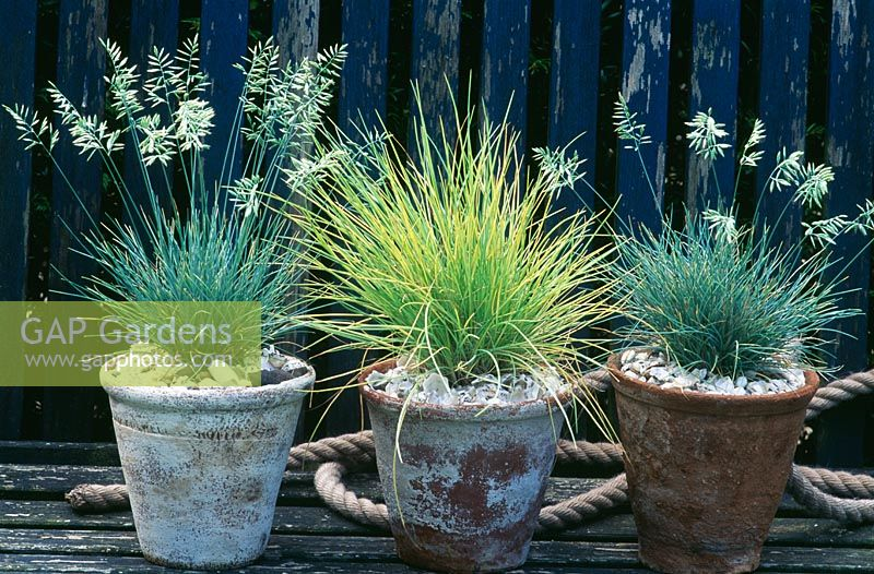 Gap gardens ornamental grasses in terracotta pots for Best ornamental grasses for pots