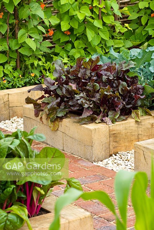 Lactuca, purple lettuce in raised vegetable bed in Dorset Cereals Edible Playground. Gold Medalist and Best in Show, RHS Hampton Court Flower Show 2008