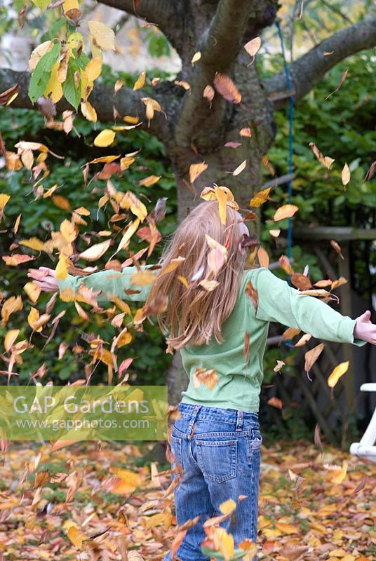 Girl throwing autumn leaves of Prunus - cherry in October