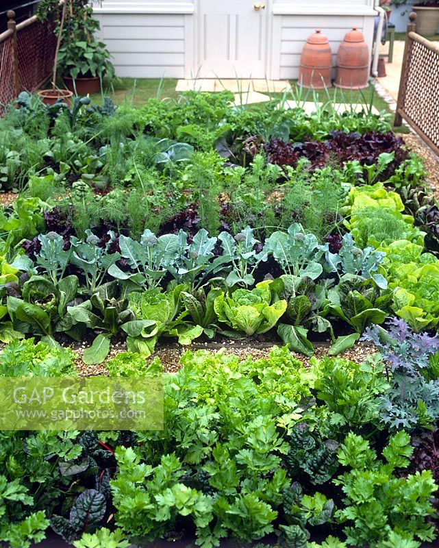 Gap gardens well tended vegetable garden with rows of - The well tended perennial garden ...