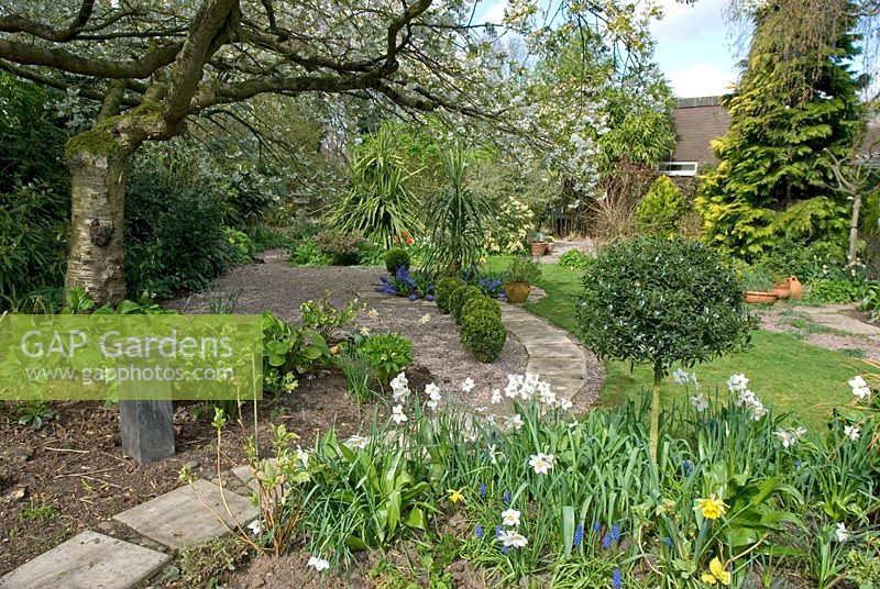 Secluded back garden with Spring borders, gravelled area, concrete slab path and lawn - Long Acre, NGS garden, Bunbury, Cheshire