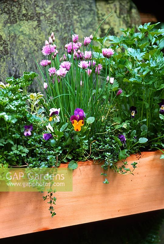 Wooden window box with edible plants including pansies, chives, sage and parsley