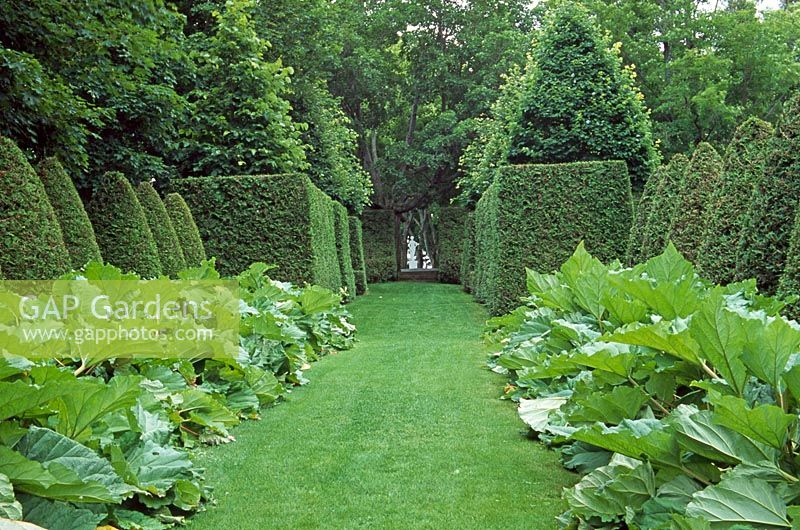 Gap gardens yew and gunnera allee les jardins de for Le jardin des 4 vents