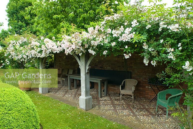 Rosa 'Francis E. Lester' trained across oak loggia - Wollerton Old Hall
