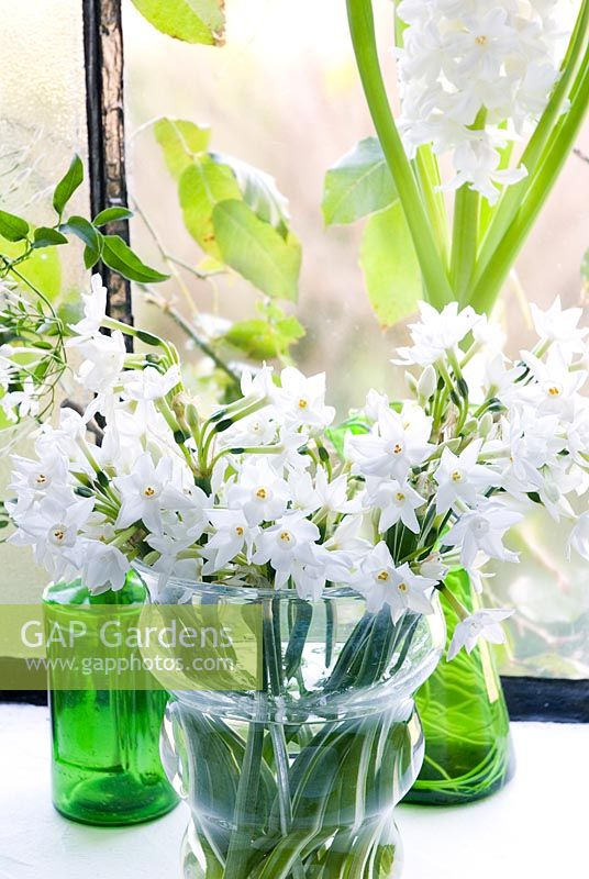 Gap Gardens Narcissus Paperwhite In Glass Vase Image No