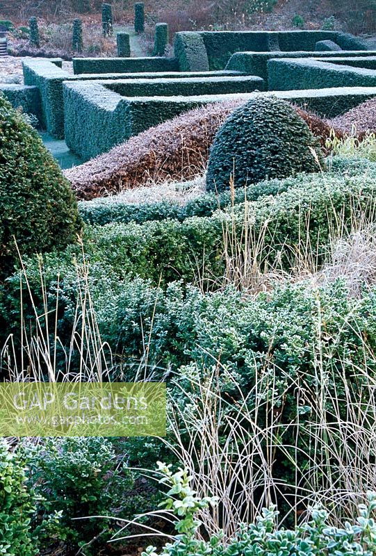 Part of the Grasses Parterre with Yew cone and box hedge - Veddw House Garden, February