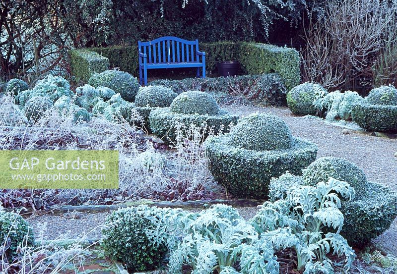 The Vegetable Garden with Box balls and 'Egg Cups' - Veddw House Garden, February
