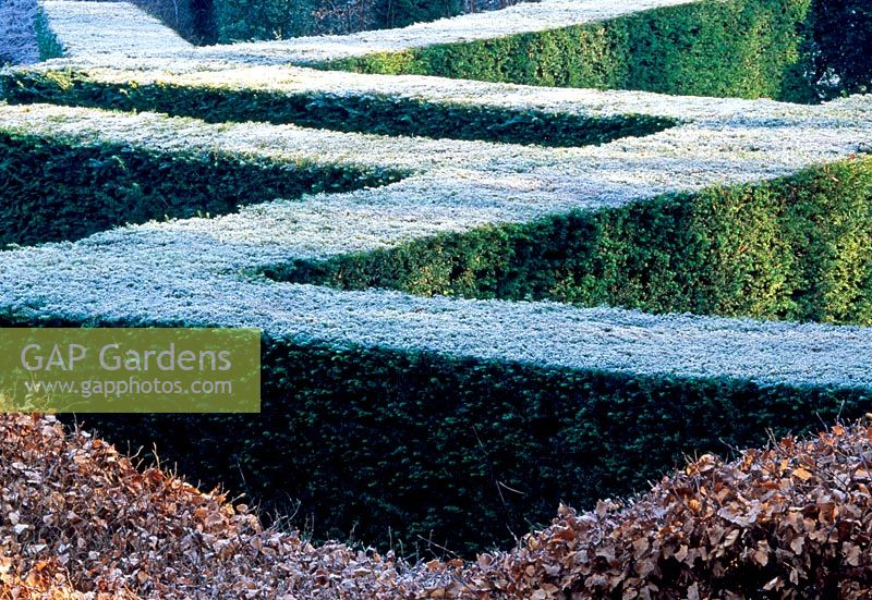 View over the Yew hedging from within the Grasses Parterre, Beech 'wavy' hedge in Foreground - Veddw House Garden, February