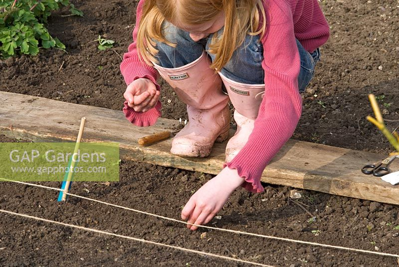 Child's Garden. A child standing on a wooden plank to prevent soil compaction while planting out seeds in rows in an organic vegetable garden. Rows of seeds include Lettuce, Carrots, Spinach, Parsley, Rocket and Beetroot.
