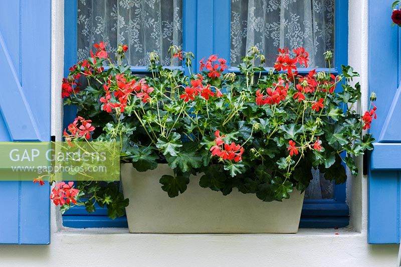 Red Pelargonium in a white windowbox - Entente Cordiale, A Touch of France Garden, sponsored by Bonne Maman, Clarke and Spears Clarke and Spears International Ltd, The English Garden Magazine - Silver-Gilt Flora medal winner for Courtyard Garden at RHS Chelsea Flower Show 2009