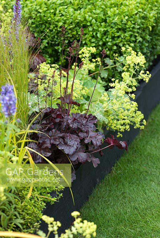Heuchera 'Obsidian' with Alchemilla mollis, Stipa tenuissima and Buxus sempervirens - An Urban Retreat by Paul Titcombe - BBC Gardeners' World Live 2009 - Gold Medallist