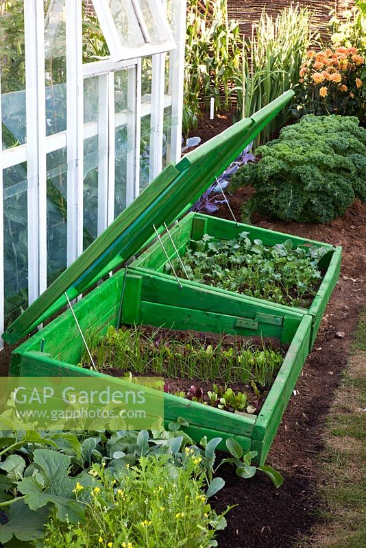 Seedlings hardening off in a cold frame within the vegetable garden of 'The Growing Tastes Allotment Garden' at RHS Hampton Court Flower Show 2009