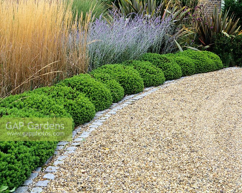 Gravel driveway edged with clipped Hebe, Perovskia, Stipa gigantea and Phormium