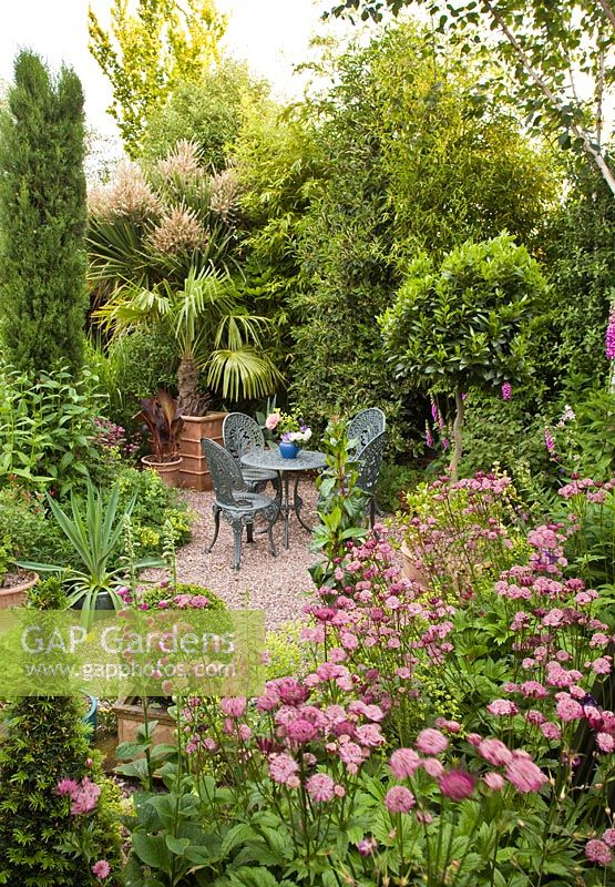 GAP Gardens - Patio area with Cordyline Australis and Astrantia ...