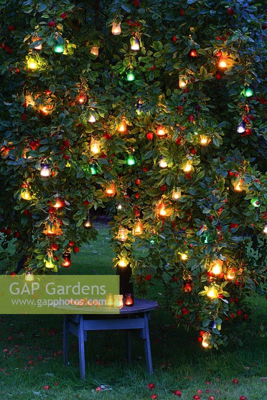 Glass lanterns hanging in an apple tree at night with rustic table beneath