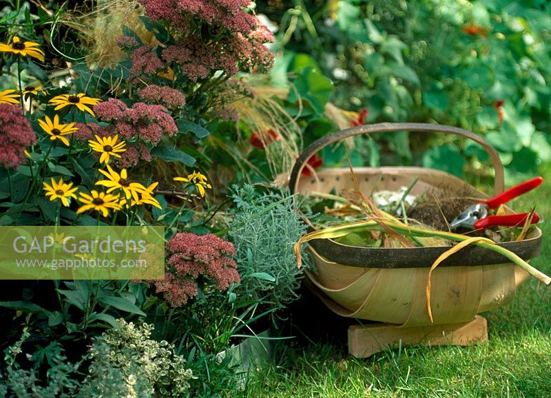 Trug with secateurs, Sedum and Rudbeckia 'Goldsturm'
