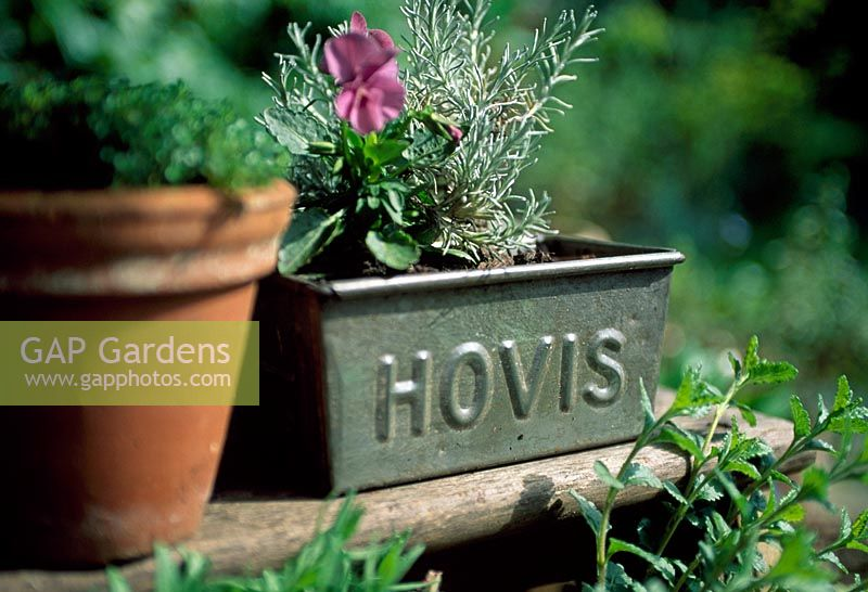 Hovis tin with Rosemary and Viola on wooden step