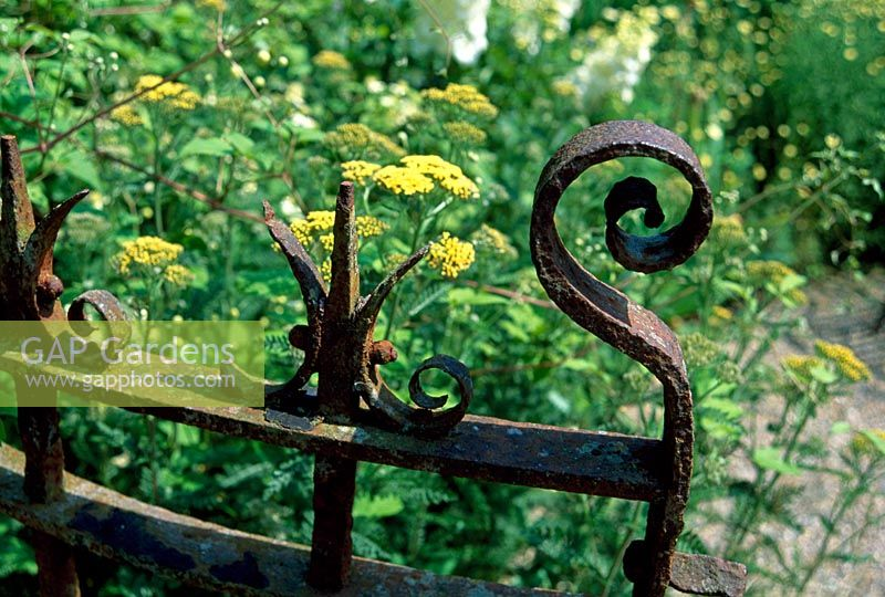 Ornate iron gate with Achillea behind