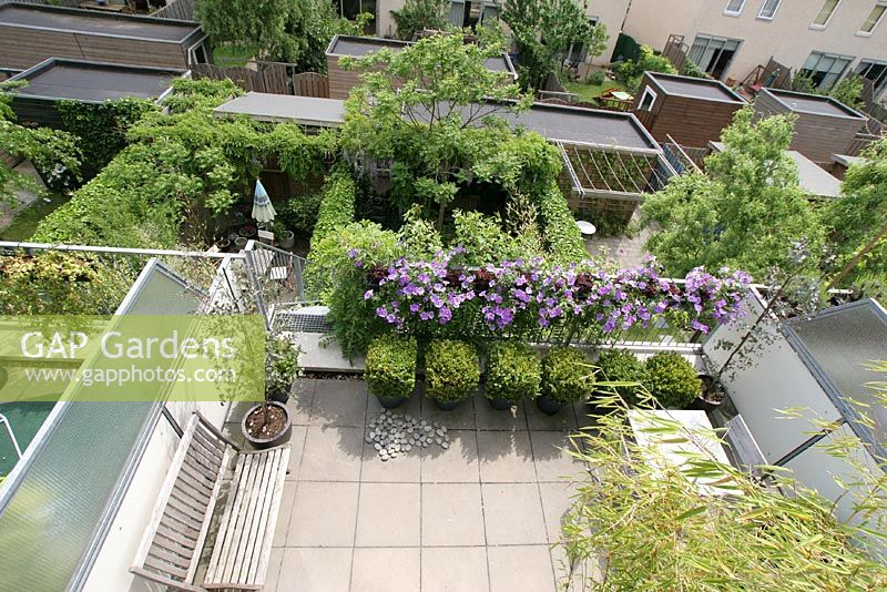 Gap gardens aerial view of petunias growing on balcony and buxus in containers on urban roof - Growing petunias pots balconies porches ...