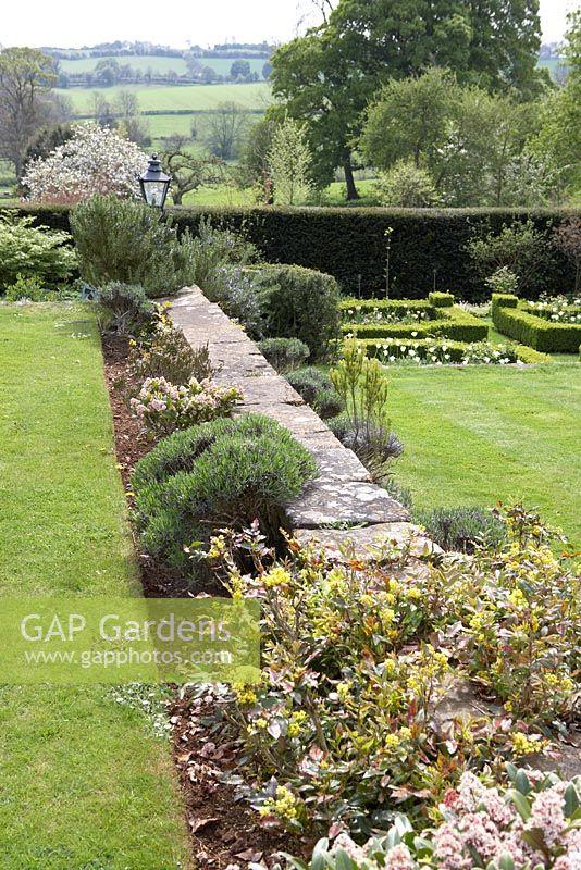 Gap Gardens Mahonia Skimmia Lavandula Lavender And Rosmarinus