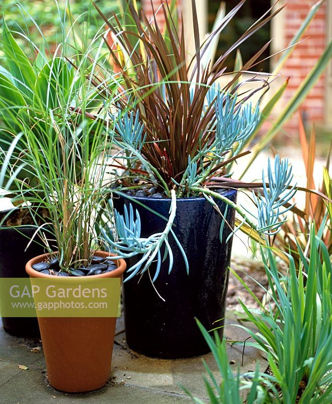 Gap gardens tall glazed pots with succulents grasses for Tall ornamental grasses for pots