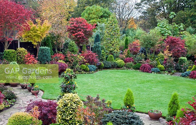Gap gardens acers and many deciduous trees and shrubs for Garden deciduous trees
