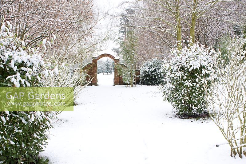 Gap Gardens Snow Covered Path With Photinia X Fraseri Red Robin