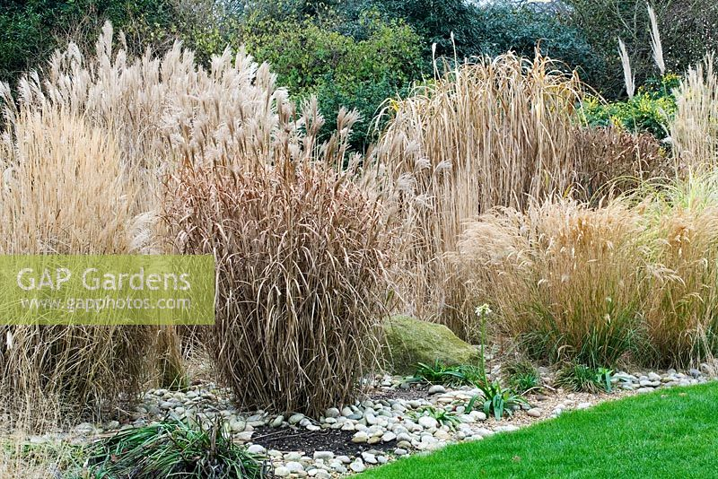 Gap gardens ornamental grasses in border rhs wisley for Small ornamental grasses for borders