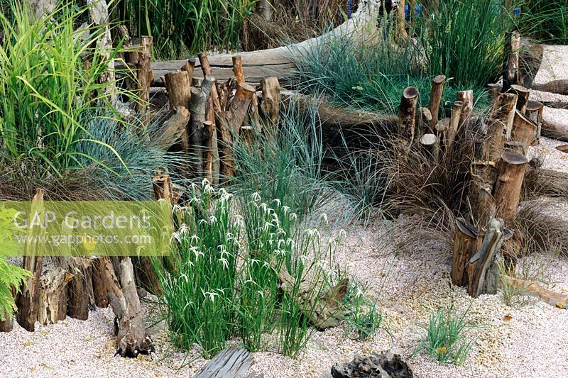 Dichromena Colorado with mixed grasses in a seaside garden with driftwood, HCFS
