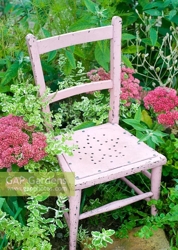 Pink chair with Sedum and apple mint