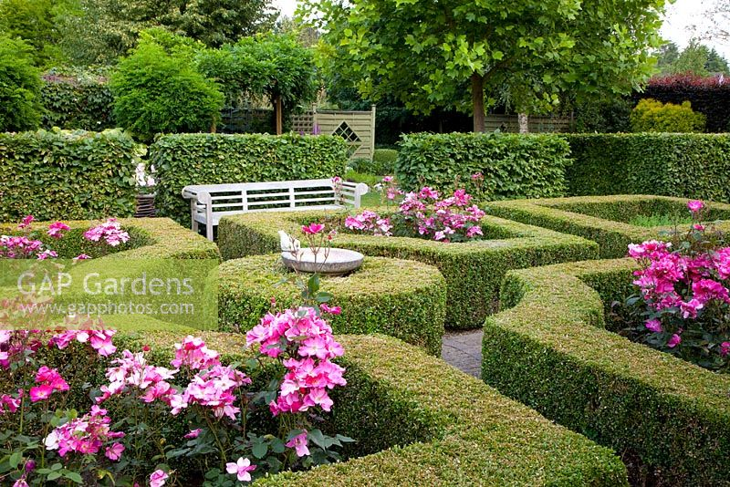Gap gardens formal rose garden with clipped buxus box for Formal rose garden layout