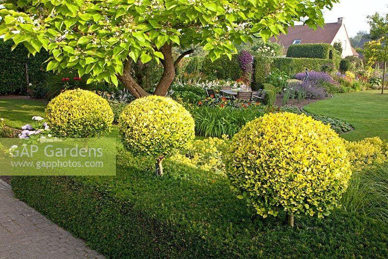 gap gardens clipped ligustrum ovalifolium 39 aureum 39 and taxus hedge image no 0167877 photo. Black Bedroom Furniture Sets. Home Design Ideas