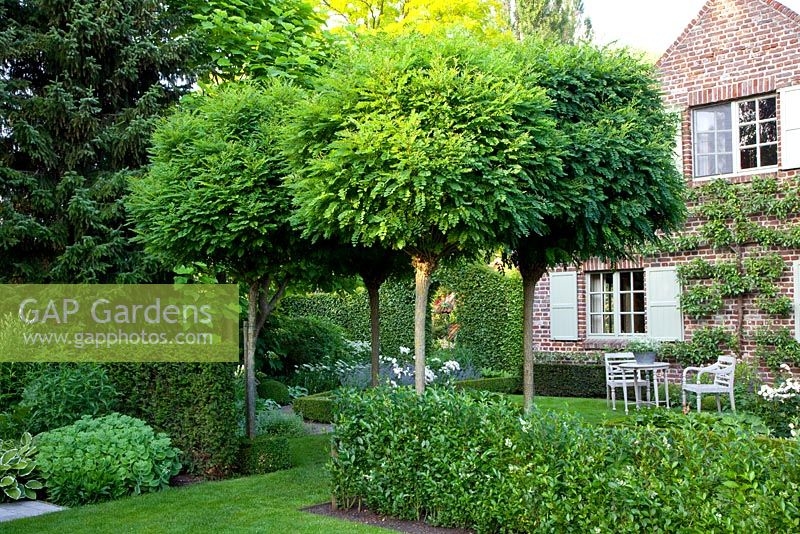 gap gardens country garden with standard robinia. Black Bedroom Furniture Sets. Home Design Ideas