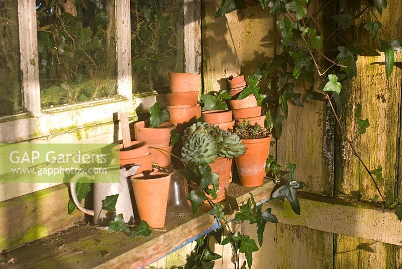 Clay pots in potting shed