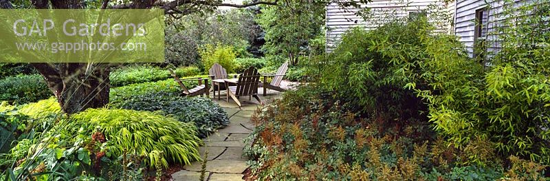 Paved patio area under the shade of a cherry tree with New England deck chairs and large beds of perennials. Planting includes Hakonechloa macra 'Aureola', Geranium macrorrhizum, Epimedium, Astilbe and bamboo - Rifkind Garden, Long Island, NY, USA