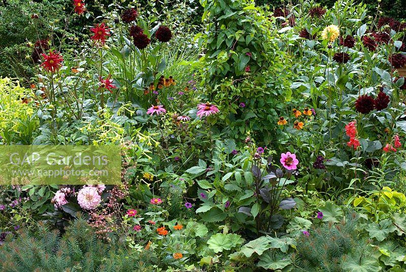 gap gardens mixed border of dahlia 39 marie schnugg. Black Bedroom Furniture Sets. Home Design Ideas