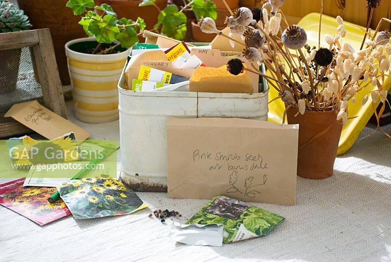 Seeds and seed box on potting bench
