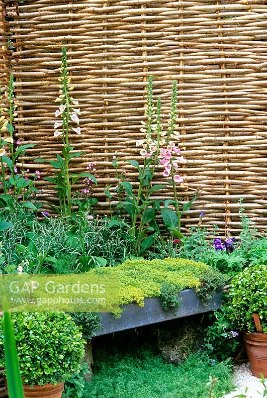 Thyme seat with willow hurdle fence boundary, Digitalis and chamomile - RHS Chelsea 2001