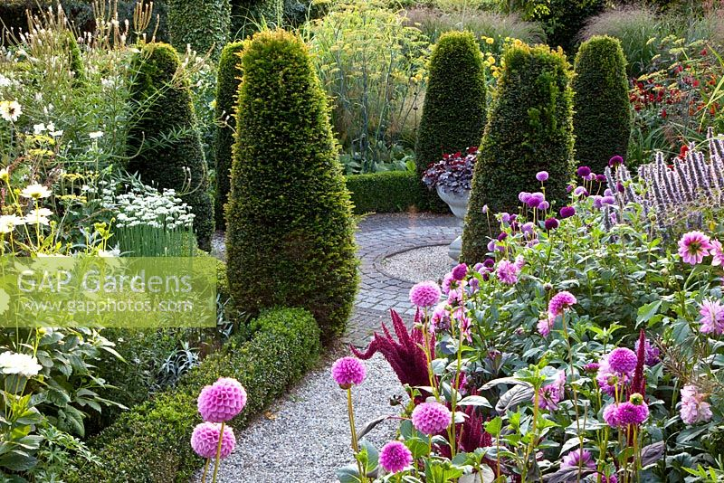 Formal Garden With Clipped Taxus   Yew And Borders Of Amaranthus, Agastache  U0027Blue Fortune