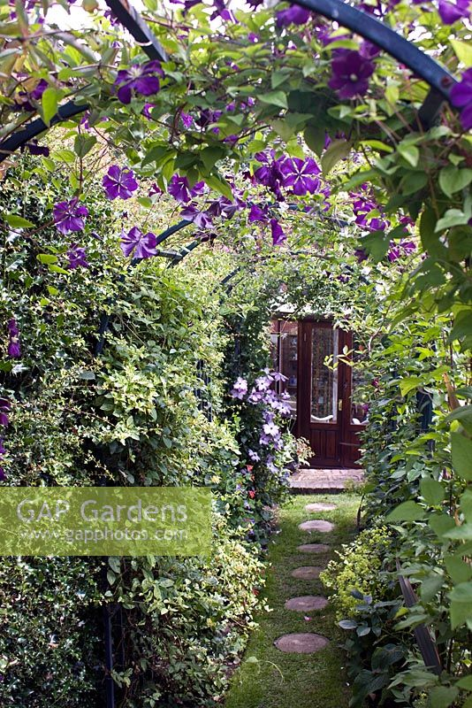 Clematis 'Ashva' growing on arch at Coley Cottage, Little Haywood open gardens