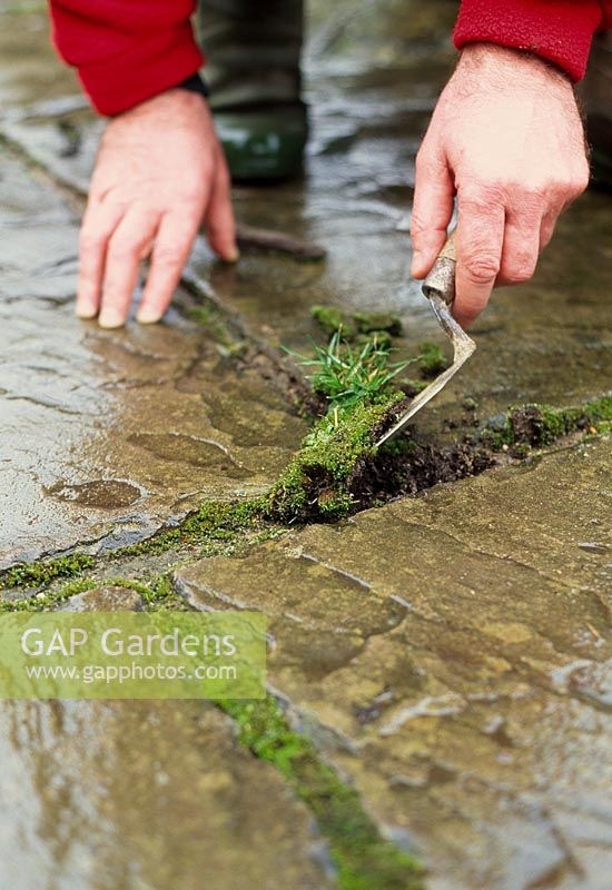 Path cleaning - With a trowel, carefully remove the weeds, making sure you remove all of the roots