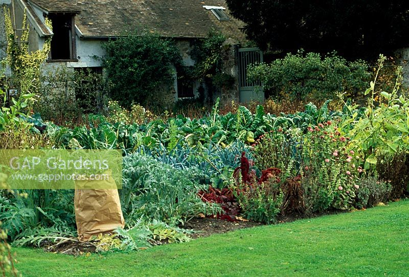 gap gardens late autumn in the vegetable garden at. Black Bedroom Furniture Sets. Home Design Ideas