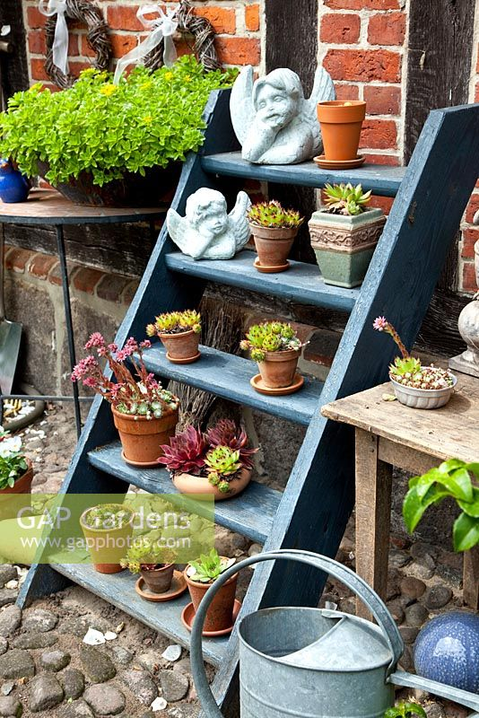 Sempervivum and other succulents in containers on wooden steps